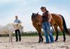 Aarden met paarden